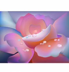 rose petal vector image vector image