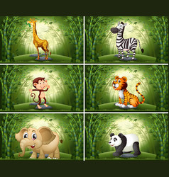 Animals in bamboo scene vector