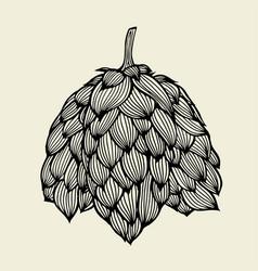beer hop vector image