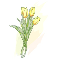 bouquet of tulips watercolor vector image
