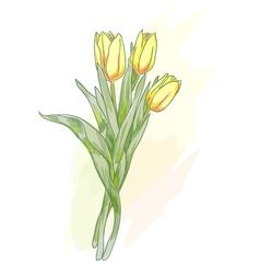 bouquet tulips watercolor vector image