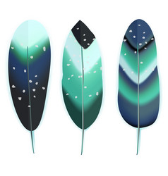 Colorful bird feathers vector