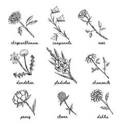 Hand drawn garden and wild flowers set vector