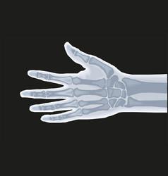 human hand bones x-ray anatomy vector image
