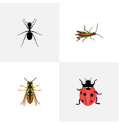 set of bug realistic symbols with sting ladybug vector image