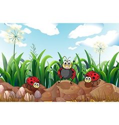 Three ladybugs above the rocks vector