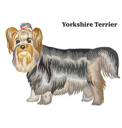 Colored decorative standing portrait of yorkshire vector