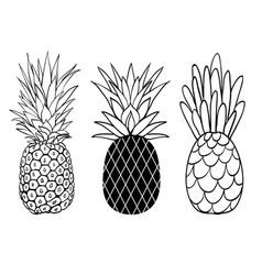 Set of three pineapple fruit styles summer vector