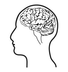 human head with brain vector image vector image