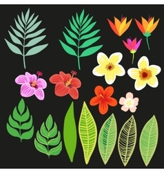 Beautiful floral jungle elements Colorful vector