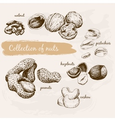 Collection nuts vector