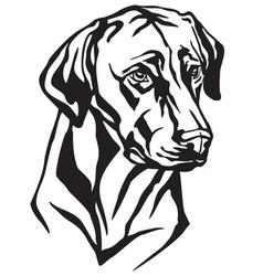 decorative portrait of dog rhodesian ridgeback vector image