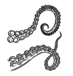 set octopus squid tentacles in engraving style vector image