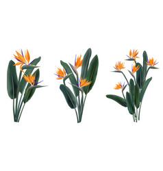 strelitzia reginae tropical flower bouquets set vector image