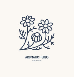 chamomile line icon aromatic herbs logo vector image vector image
