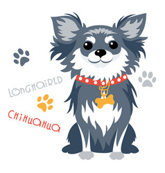 funny longhaired chihuahua dog sitting vector image vector image