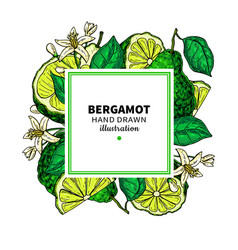 bergamot drawing frame isolated template vector image