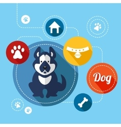 Dog info graphics vector image