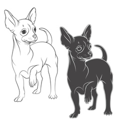 drawing a chihuahua solated objects vector image