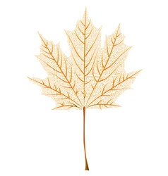 Maple leaf skeleton vector image