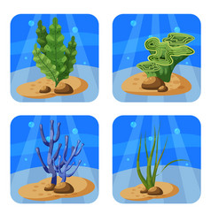Set of colorful corals and algae on a blue vector