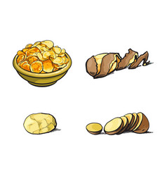 Sketch raw potato with peel slices chips vector