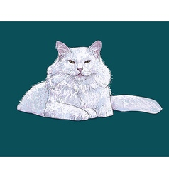 White furry cat on white vector image
