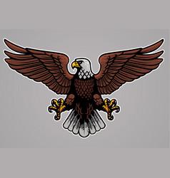 Bald eagle spread his wings vector