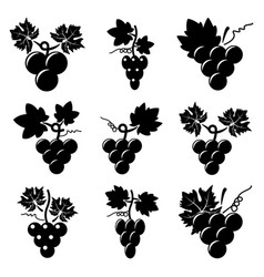 black and white icons of grapes vector image