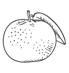 Sketch tangerine with leaf vector