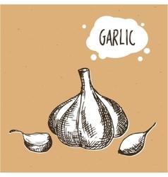 Garlic in engraving vintage style Hand drawn vector image vector image