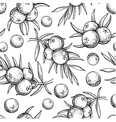 juniper seamless pattern drawing isolated vector image
