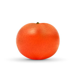 realistic mandarin isolated on white background vector image