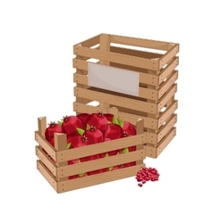 Wooden box full of pomegranate isolated vector image