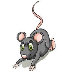 Black rat vector image