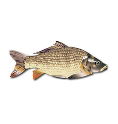 fish realistic vector image