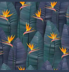 Seamless pattern with tropical strelitzia vector