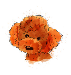 dog hand painted watercolor isolated vector image