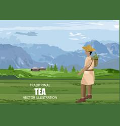 Asian man walking in a tea field with basket vector