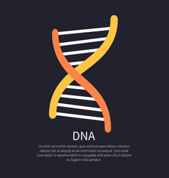 Dna yellow and orange helix colorful vector