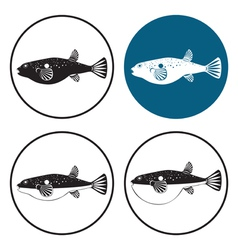 fugu fish vector image