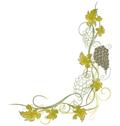 Grape vines vector image