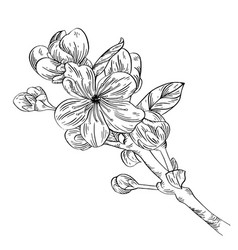 Apple branch with flower ink sketch on white vector
