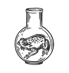 frog animal in laboratory flask engraving vector image