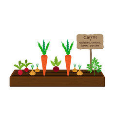 growing vegetables and plants on one bed vector image