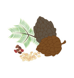Pine nuts organic diet snack vector