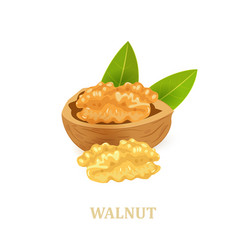 Walnuts with leaves on white background for your vector