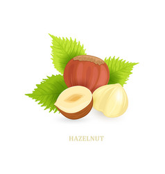 group of hazelnuts with leaves on white vector image