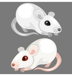 Laboratory white albino rat animal vector