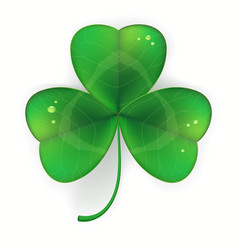 clover shamrock realistic saint patricks day vector image